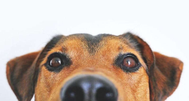 Livros sobre cachorros